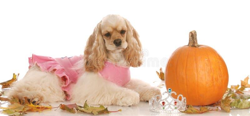 Cão no ajuste de Halloween fotos de stock royalty free