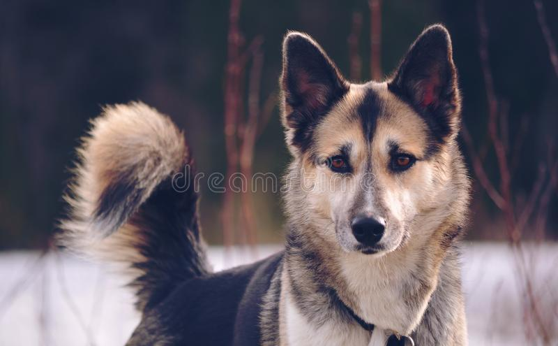 Cão no beautifull da neve fotos de stock royalty free