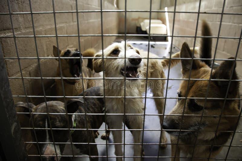 Cão no canil fotografia de stock royalty free