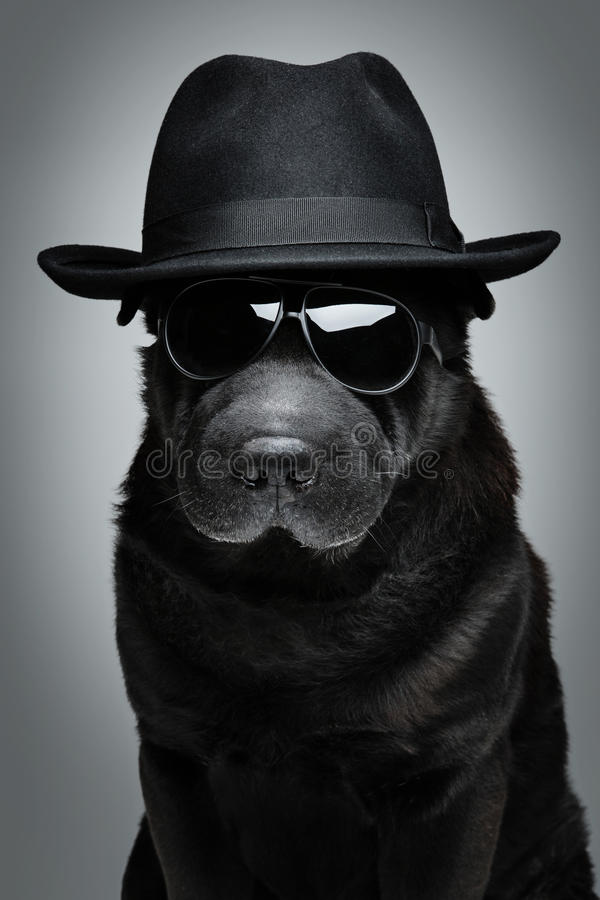 Cão no chapéu e nos óculos de sol fotografia de stock