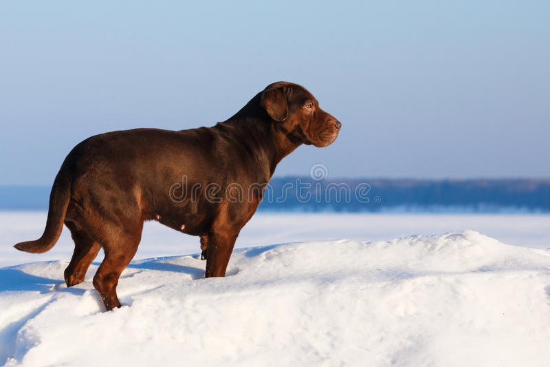 Cão no dia ensolarado imagens de stock