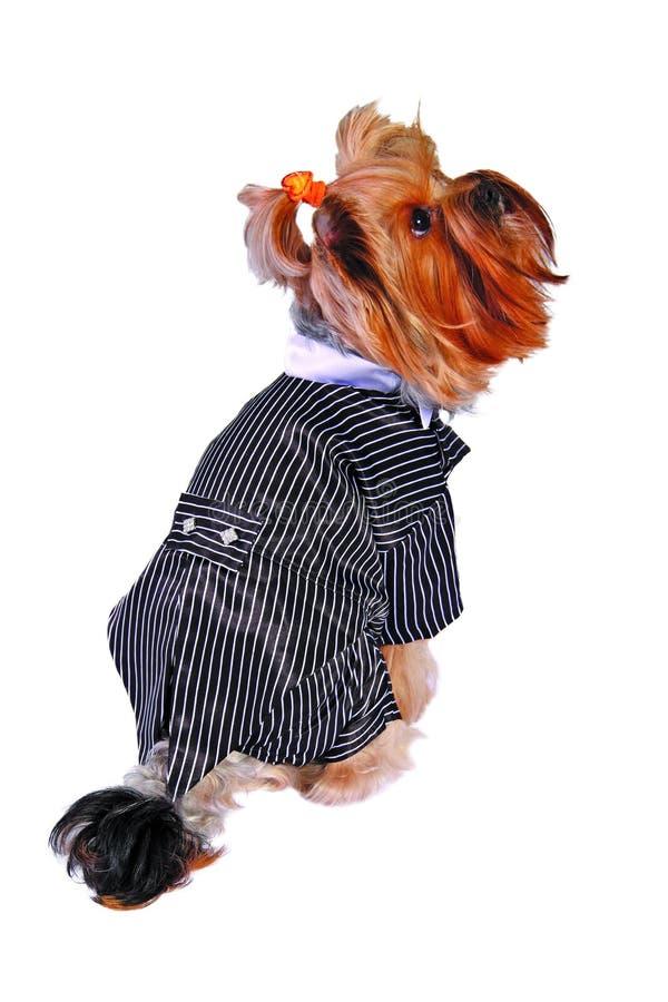 Cão no fumo fotografia de stock royalty free