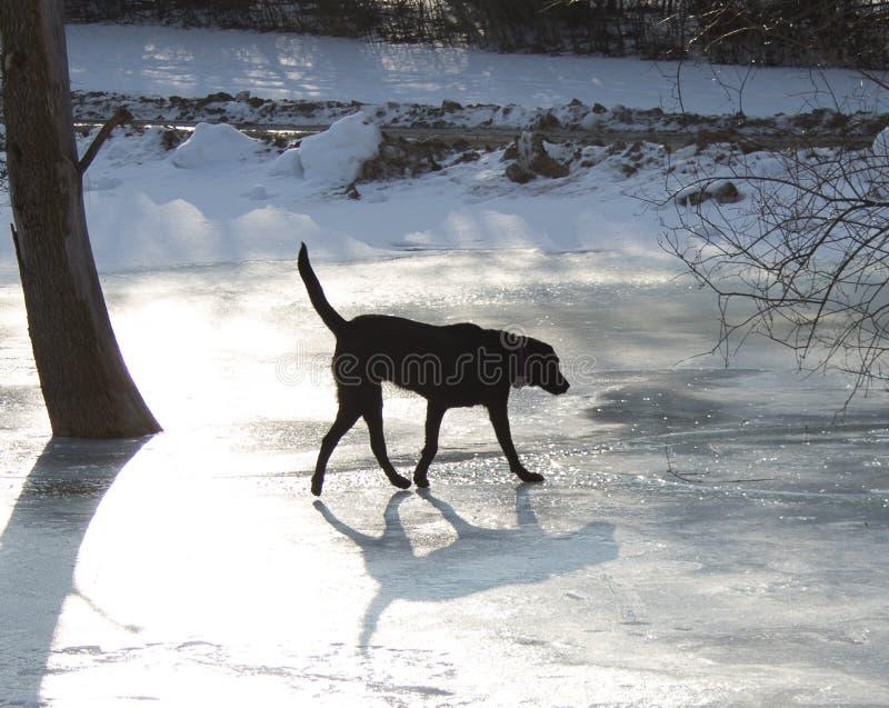 Cão no gelo imagens de stock