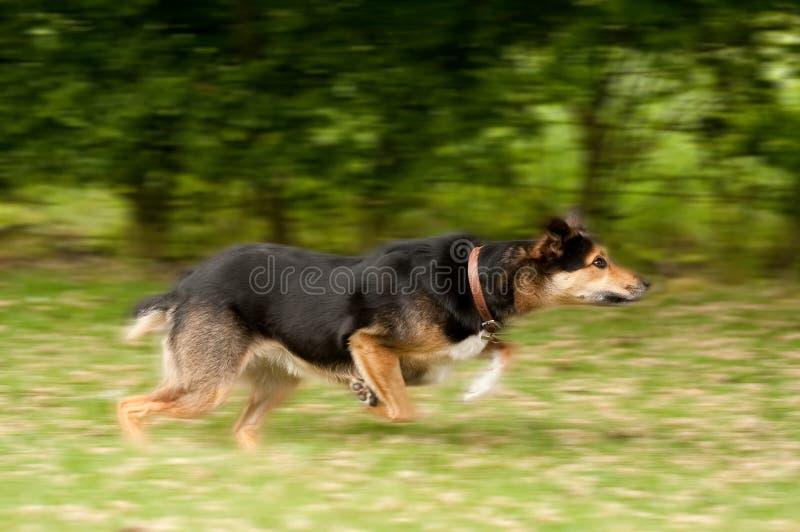 Cão no movimento imagens de stock