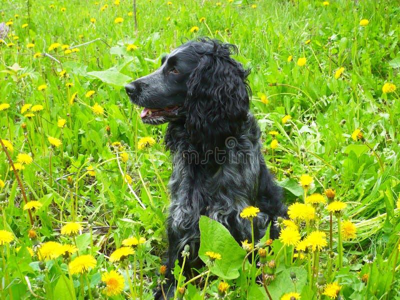 Cão no prado imagem de stock royalty free