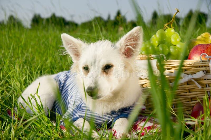 Cão no prado imagens de stock royalty free