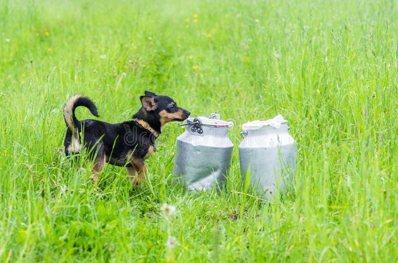 Cão no prado do verão fotos de stock