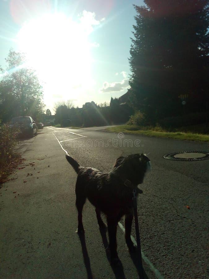 Cão no sol imagem de stock royalty free