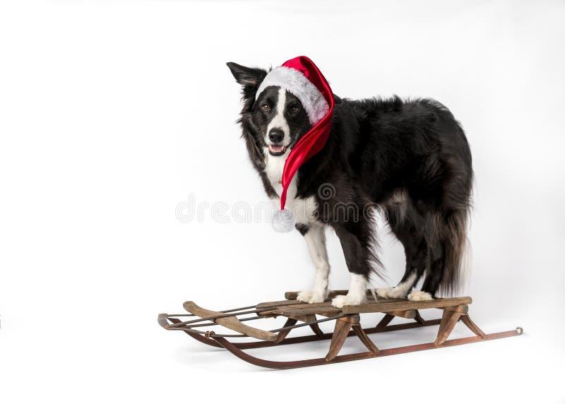 Cão no trenó imagens de stock