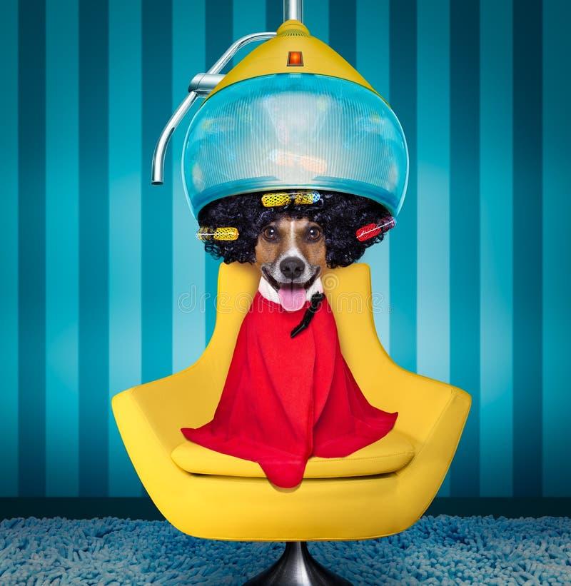 Cão nos cabeleireiro ou no groomer fotografia de stock royalty free