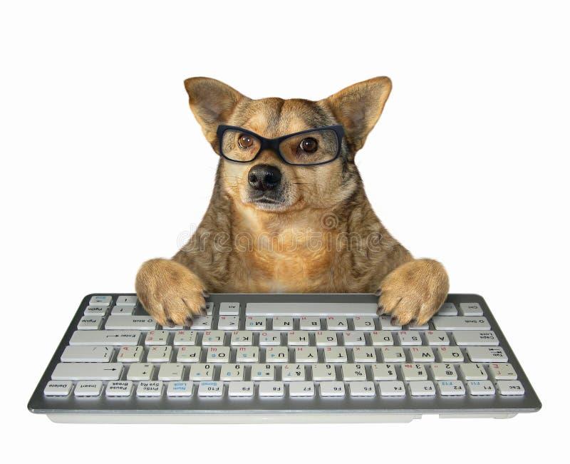 Cão nos vidros com um teclado branco imagens de stock royalty free