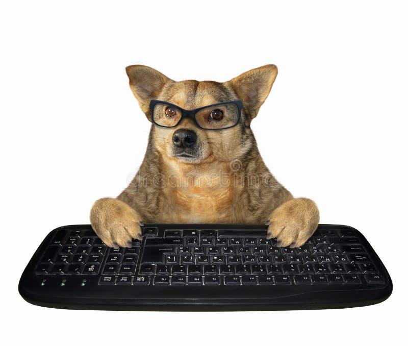 Cão nos vidros com um teclado preto fotos de stock