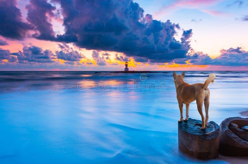 Cão olhando para o mar de Khao Lak com um farol na praia no pôr do sol na província de Phang Nga, Tailândia imagem de stock