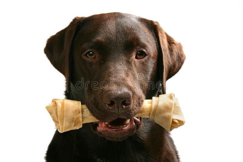 Cão + osso = animal de estimação feliz fotos de stock
