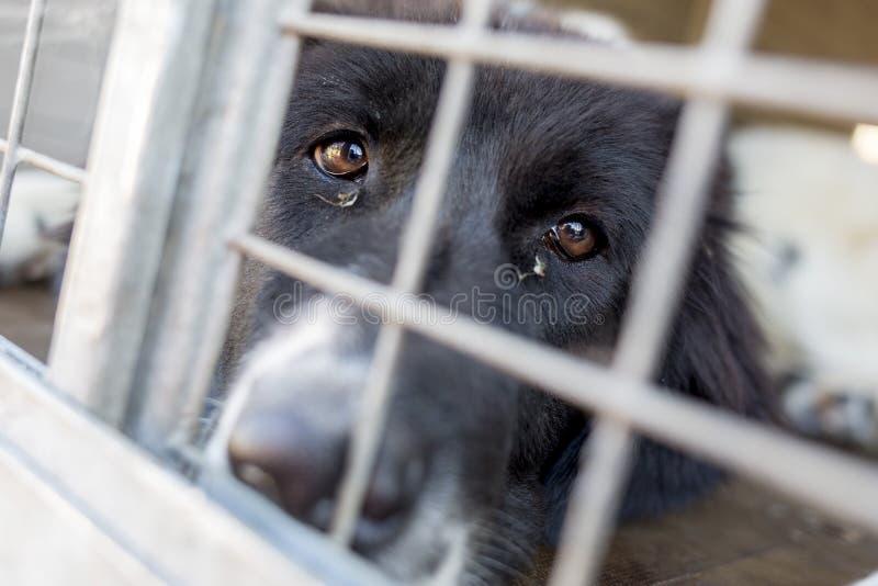 Cão Ownerless em uma gaiola foto de stock