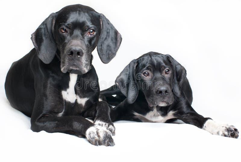 Cão, pai e filho da família fotografia de stock royalty free