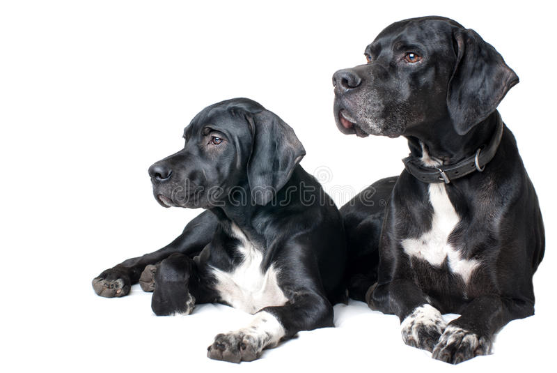 Cão, pai e filho da família imagem de stock