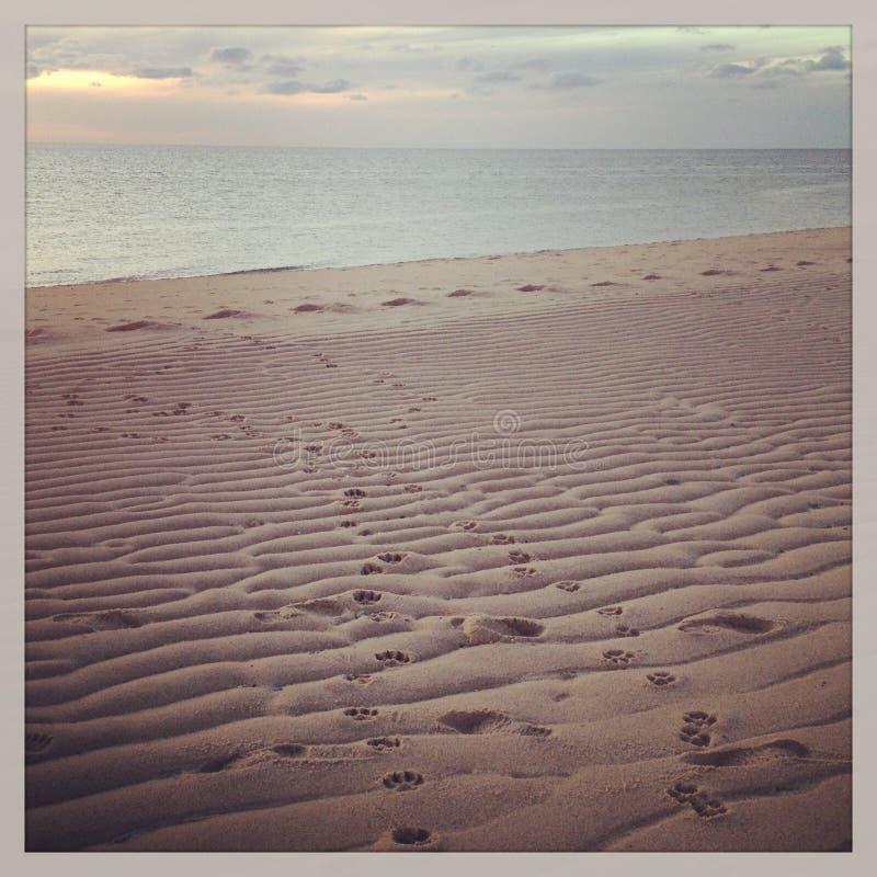 Cão Pawprints na areia na praia de Provincetown fotografia de stock royalty free