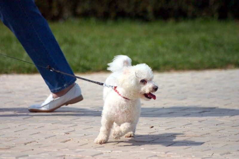 Cão pequeno foto de stock royalty free