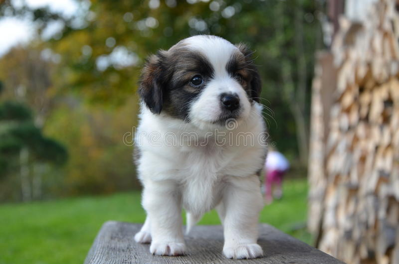 Cão pequeno foto de stock