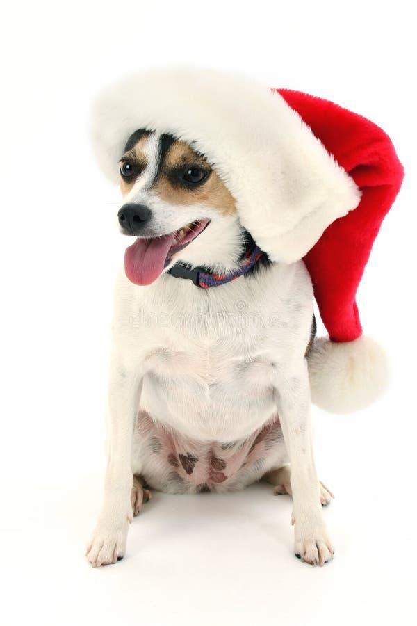 Cão pequeno adorável no chapéu de Santa foto de stock royalty free