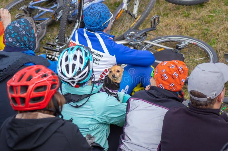Cão pequeno da chihuahua que guarda seu mestre na multidão na reunião local do clube da bicicleta fotografia de stock