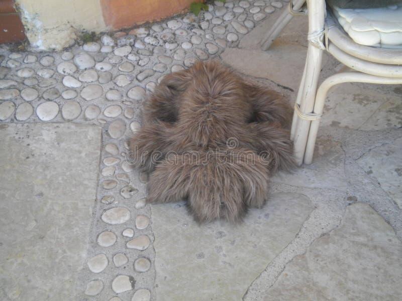 Cão pequeno em Kefalonia imagens de stock