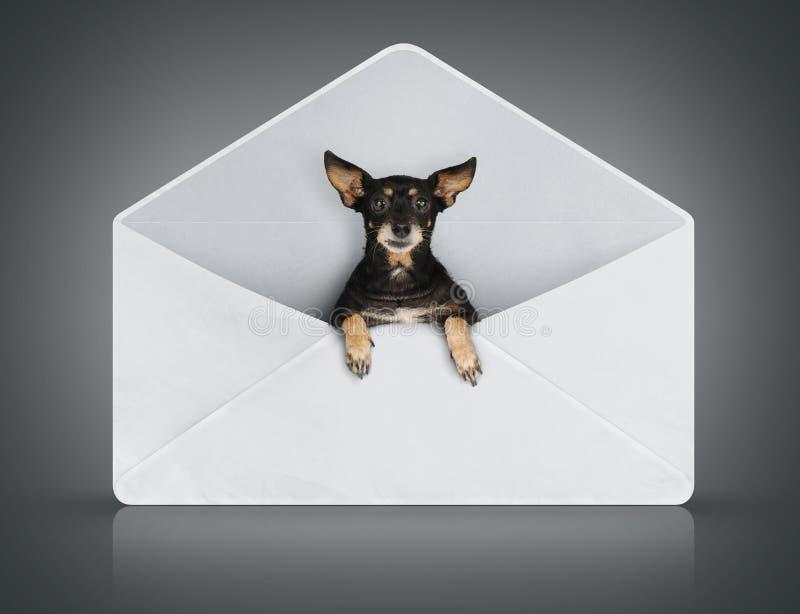 Cão pequeno engraçado na tampa do borne
