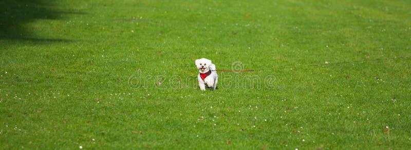 Cão pequeno no meio do campo fotos de stock