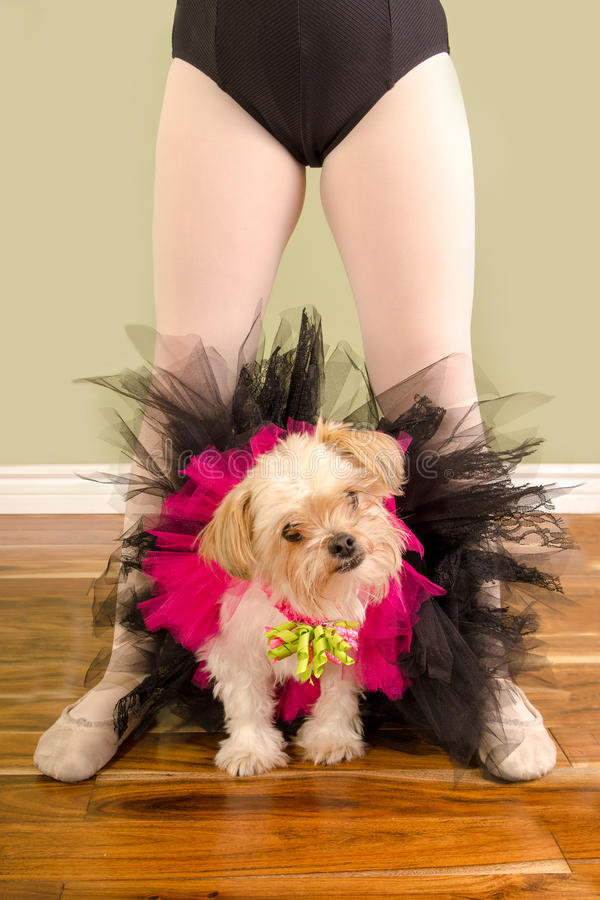 Cão pequeno pobre no tutu com pés do bailado da criança imagem de stock royalty free