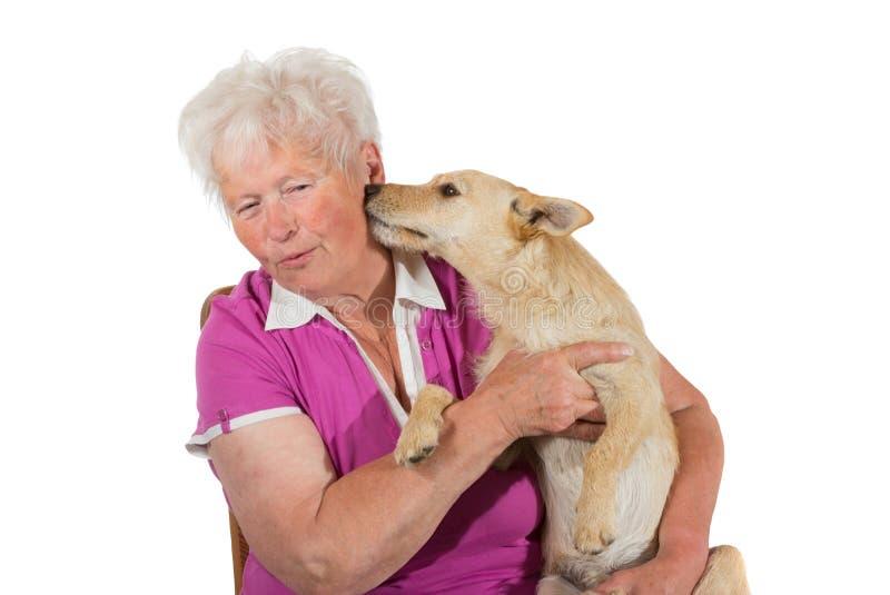 Cão pequeno que lambe seu proprietário idoso foto de stock royalty free