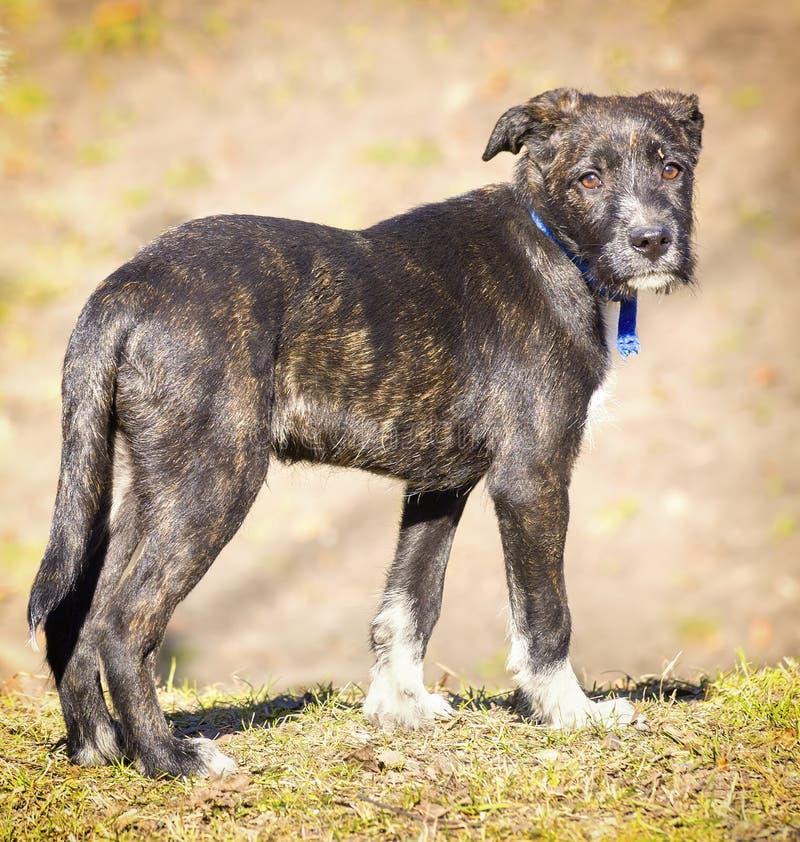 Cão perdido, triste fotos de stock