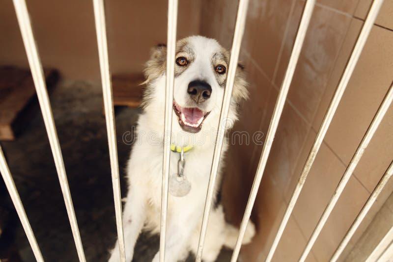 Cão positivo bonito que olha no emotio da gaiola do abrigo, o feliz e o triste fotos de stock