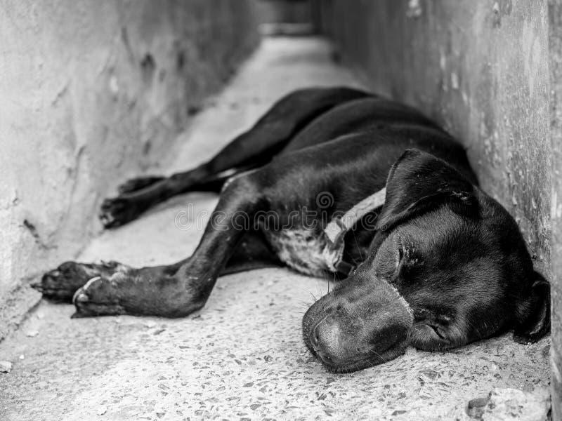 Cão preto fotografia de stock royalty free