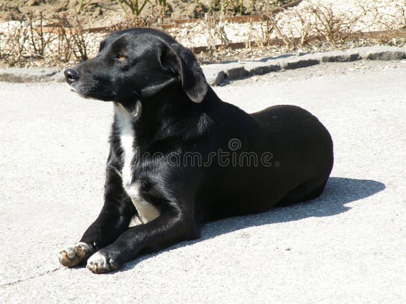 Cão preto fotos de stock royalty free