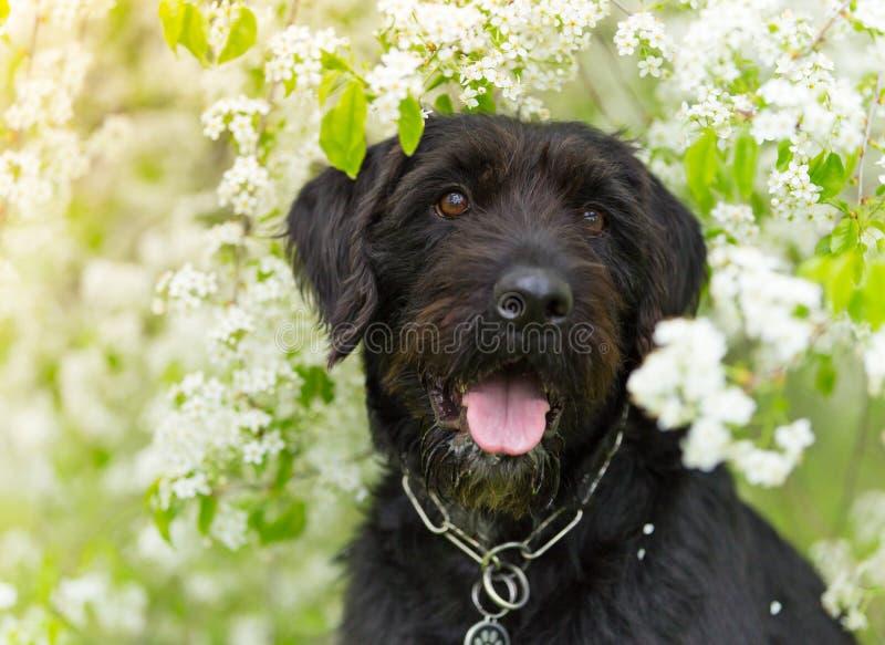 Cão preto bonito da vira-lata com cara engraçada fotografia de stock