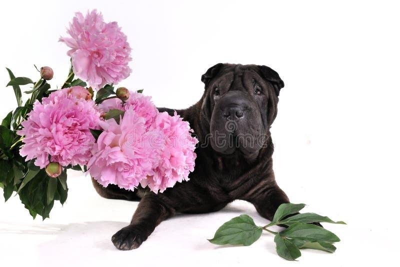 Cão preto com flores imagens de stock royalty free