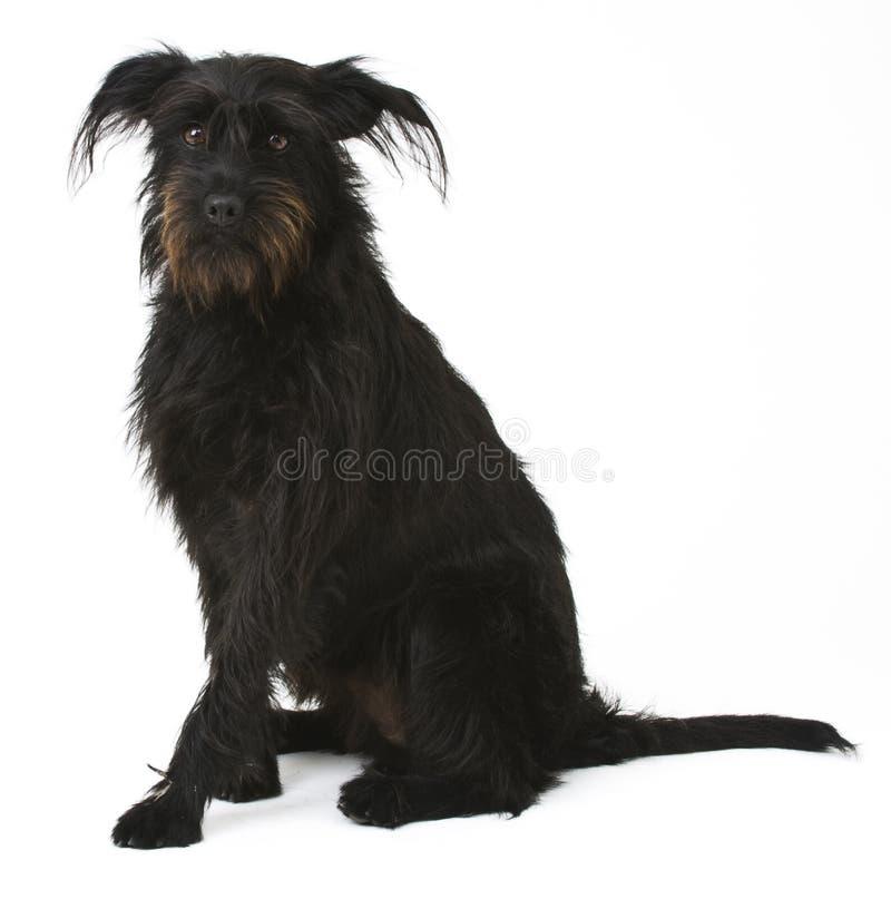 Download Cão preto da mistura imagem de stock. Imagem de mamífero - 16851943