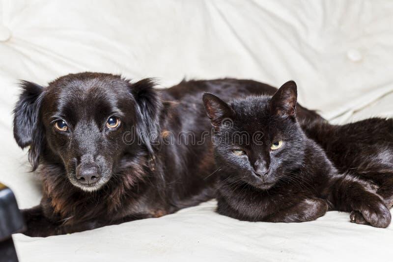 Cão preto e gato preto fotografia de stock