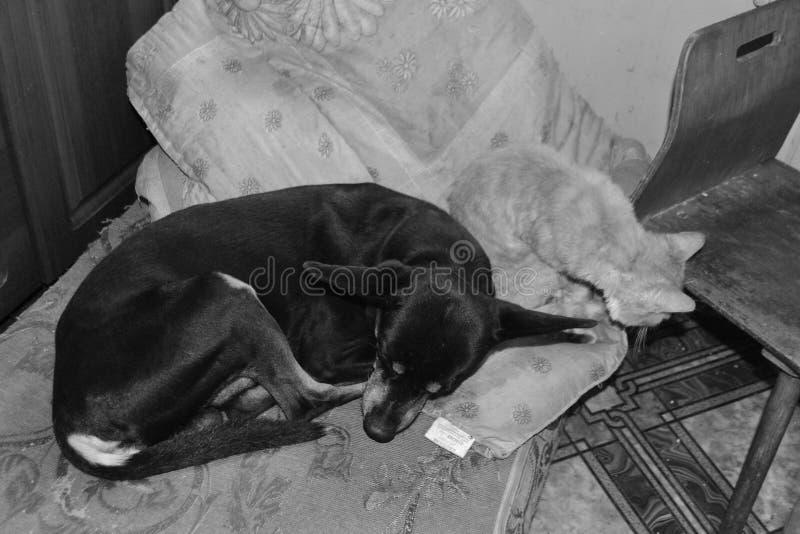 Cão preto e gato vermelho que dormem junto fotografia de stock royalty free