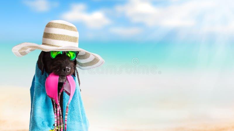 Cão preto engraçado em um Sandy Beach fotografia de stock royalty free