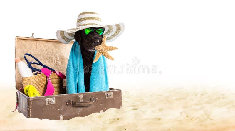 Cão preto engraçado em um Sandy Beach foto de stock royalty free