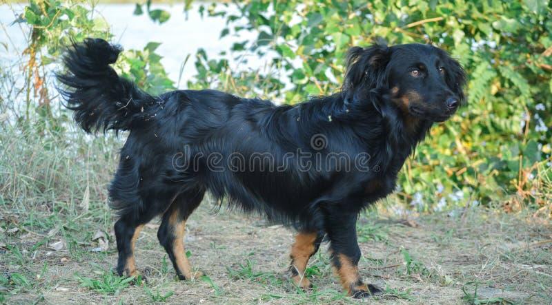 Cão preto pequeno no verde foto de stock royalty free