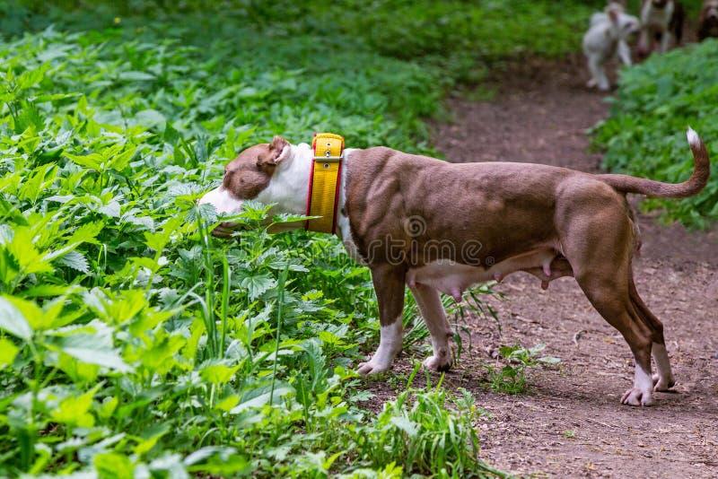 Cão que anda no parque fotografia de stock royalty free