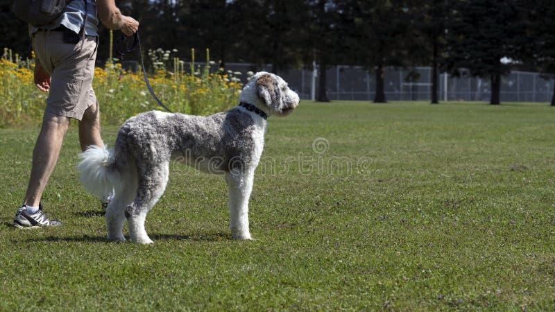 Cão que anda no verão do parque imagens de stock royalty free