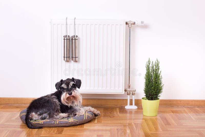 Cão que encontra-se na frente do calefator imagem de stock royalty free