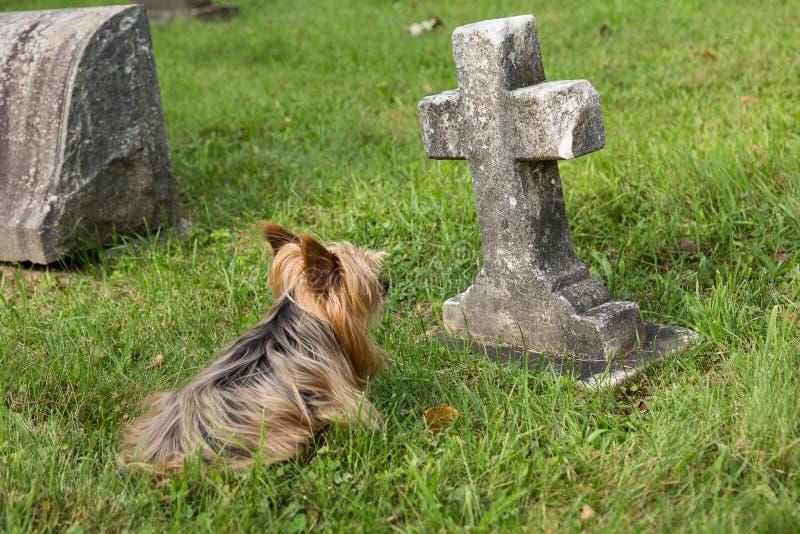 Cão que encontra-se para baixo guardando a sepultura da criança imagens de stock