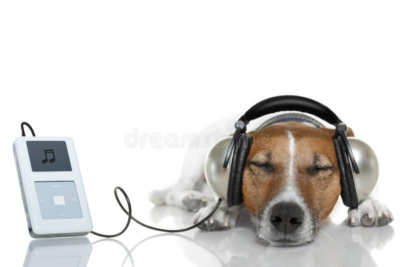 Cão que escuta a música imagens de stock royalty free