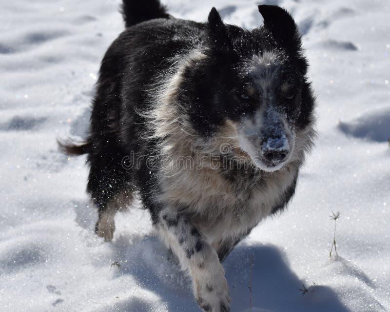 Cão que funciona através da neve imagens de stock