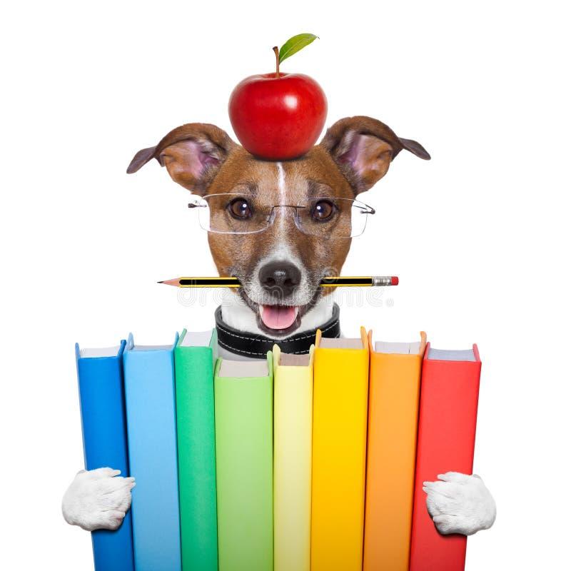 Cão e livros imagem de stock